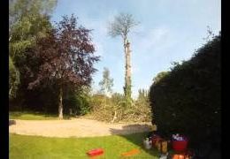 Dead Horse Chestnut Removal