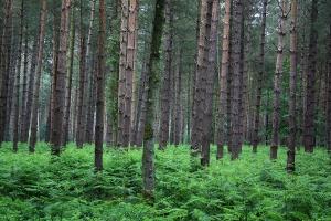 tree-services-felthorpe